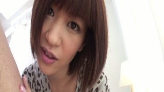 Nasty asian short haired MILF gives a head on POV video